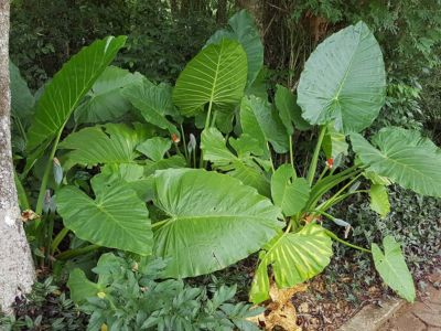 Iguazu 23