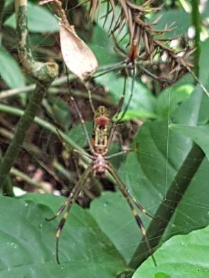 Iguazu 31