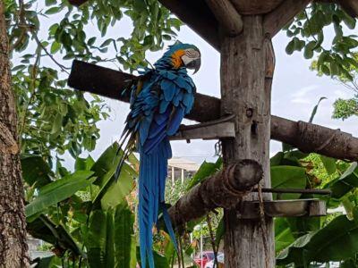 Iguazu 32