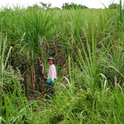 Filippine19