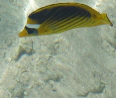 Sharm5