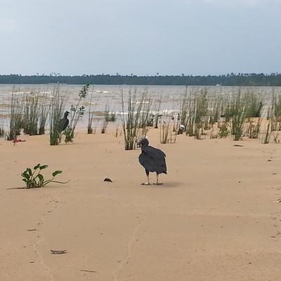 Un uccello selvatico ecquivalente dei nostri gabbiani