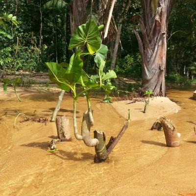 Rio all'interno della Foresta