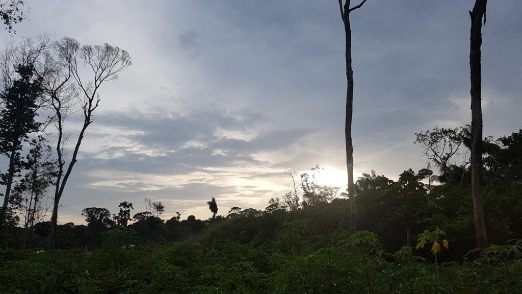 Natura d'Amazzonia